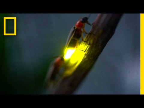 Fourth of July Fire(Fly)Works: Fireflies & Lightningbugs