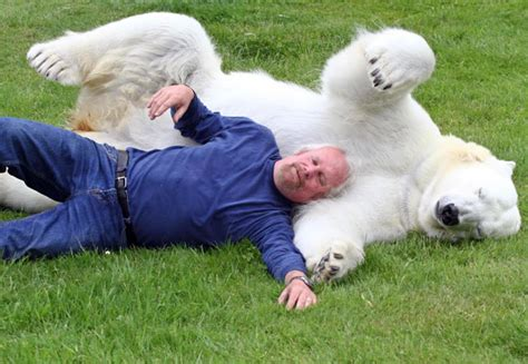 Crazy Man Swimming With Polar Bear - Would You?
