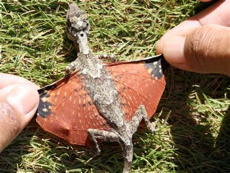 Real-Life Avatar Flying Dragons Discovered In Indonesia