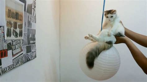 Wrecking Ball Parody by Bella the Cat , Miley Cyrus - YouTube