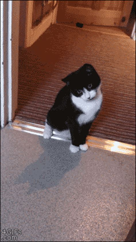 Funny Cat Gets Scared (gif)   LuvBat