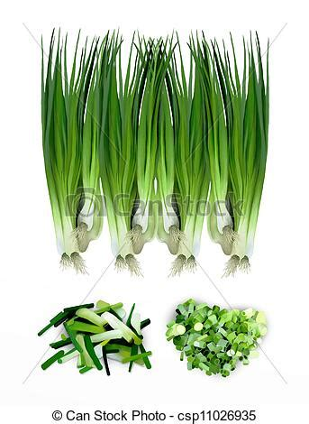 Hand drawing of fresh spring onions