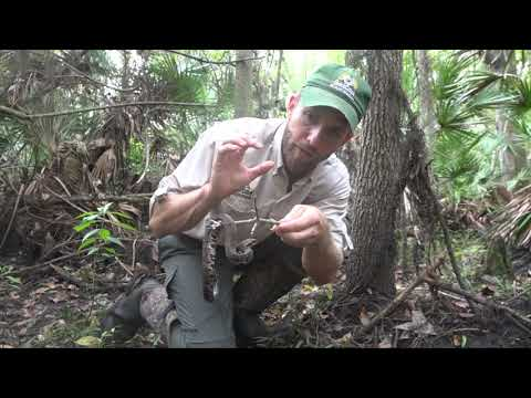 Snake Removal - Wildlife Removal Services of South Florida