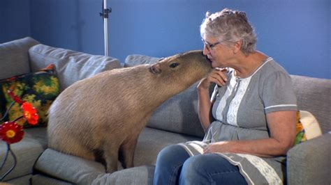 From a Skunk to a Capybara, the Bizarre Creatures That