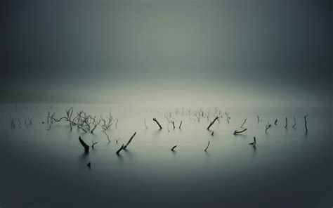 lake, Overcast, Water, Branch, Monochrome, Mist Wallpapers